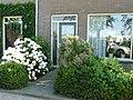 Hortensia in bloei 4 en de fotograaf - panoramio.jpg