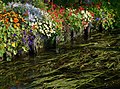 Hortillonnages d'Amiens 230908 05.jpg