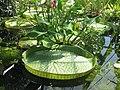 Hortus Botanucus Basel (CH) - panoramio.jpg