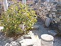 Houses on Delos (XVIII) (5182844398).jpg