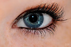 English: A human eye with mascara on the eyelashes