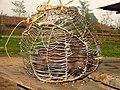 Hunting Crestless Porcupine Captive IMG 0717.jpg