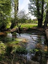 IMG 20180509 123000, Río Aulencia en el curso medio del río Guadarrama.jpg
