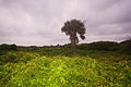 IOP-dune-vegetation-sc1.jpg