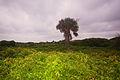 IOP-dune-vegetation-sc1.jpg