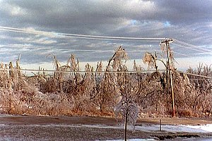 January 1998 North American ice storm - Image: Ice Storm 98 trees line Noaa 6198