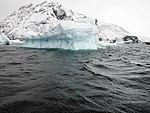 Icebergs (24009298993).jpg