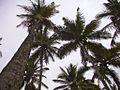 Ilha de Barra Velha (6624399019).jpg