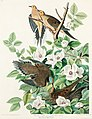 Illustration from Birds of America (1827) by John James Audubon, digitally enhanced by rawpixel-com 17.jpg