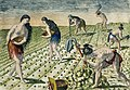 Illustration from Grand Voyages by Theodor de Bry, digitally enhanced by rawpixel-com 20.jpg
