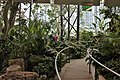 Inside the Amazon Spheres (40531822934).jpg