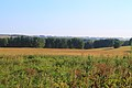 Iskitimsky District, Novosibirsk Oblast, Russia - panoramio (22).jpg