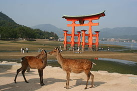 Cặp hươu sao trước cổng torii của đền Itsukushima lúc thủy triều xuống, một trong Nhật Bản tam cảnh thuộc đảo Itsukushima, phường Miyajima, thành phố Hatsukaichi, tỉnh Hiroshima.