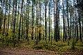 Jabłonna, Poland - panoramio - Roman Eugeniusz (14).jpg