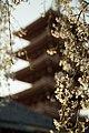 Japan A Japanese Spring (14158135413).jpg