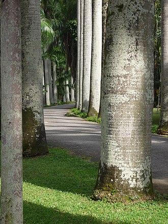 Caracas Botanical Garden - Image: Jardín Botánico de la U.C.V