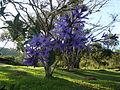 Jardim da Pousada Pica-Pau.JPG