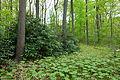 Jenkins Arboretum - DSC00694.JPG