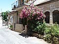 Jerusalem Rama street Nerium oleander.jpg