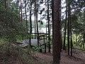 Jezioro Duży Sucharek - panoramio (46).jpg