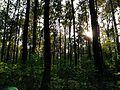 Jungle of Buxa.jpg