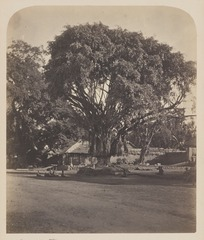 KITLV 4398 - Isidore van Kinsbergen - Audience on the square with the banyan tree outside the Puri (Kraton) of the prince of Boeleleng Singaradja - 1865.tif