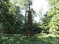 Kaniavos sen., Lithuania - panoramio (35).jpg