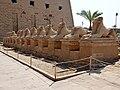 Karnak Tempel Dromos 29.jpg