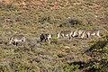 Karoo National Park 2014 49.jpg