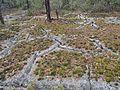 Karstsprickor i Ojnareskogen.jpg