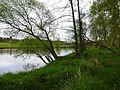 Katzenrohrbach, Fluss Regen.jpg