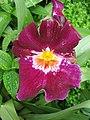 Kew Gardens Purple Flower.jpg