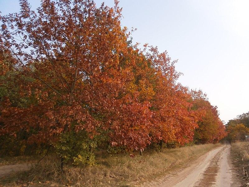 File:Khorol's'kyi district, Poltavs'ka oblast, Ukraine - panoramio (144).jpg