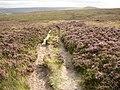 Kirklees Way, Slaithwaite Moor, Slaithwaite - geograph.org.uk - 540862.jpg