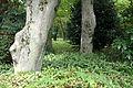 Kitanomaru Park - Tokyo, Japan - DSC06499.JPG