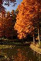 Kobe Suma Rikyu Park01n4592.jpg