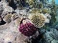Korallenriff im Roten Meer.DSCF0779BE.jpg