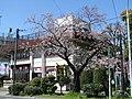 Kototoi Dango Shop 20090402.jpg