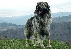 Image Result For Siberian Husky Charakter
