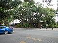 Kuranda QLD 4881, Australia - panoramio (63).jpg