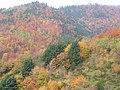 La forêt du Fenarupt - panoramio.jpg