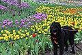 Labradoodle Flowers.jpg
