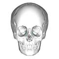 Lacrimal bone - anterior view.png