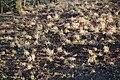 Lainzer Tiergarten März 2014 Dianawiese 1.jpg