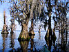 Lake Louisa State Park.jpg
