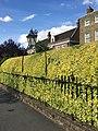 Lamp and railings outside 97 Dulwich Village (1).jpg
