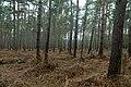 Landschap De Stroopers te Kemzeke - 371886 - onroerenderfgoed.jpg