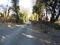 Lane, Carrickshandrum - geograph.org.uk - 1748978.jpg