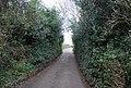 Lane to Bossington - geograph.org.uk - 1658156.jpg