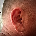 Large, rounded, well-defined male ear.jpg